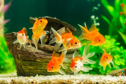 Aquarium Einrichtung