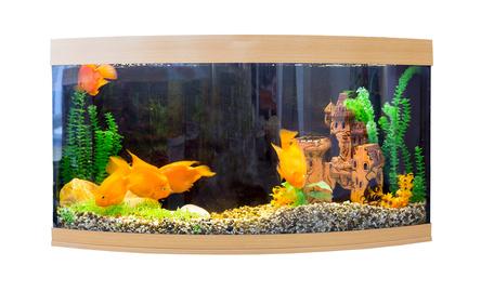 Tierbedarf Aquarium