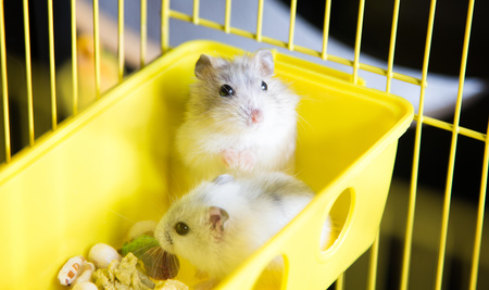 Utensilien für Hamster