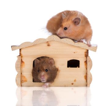 Hamsterhaus Holz