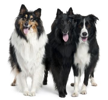 Hundezubehör - Hundepflege