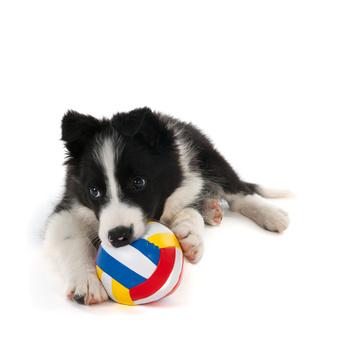 Hundespielzeug für Welpen