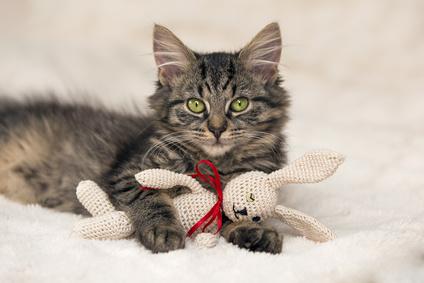 Katze mit Kuscheltier