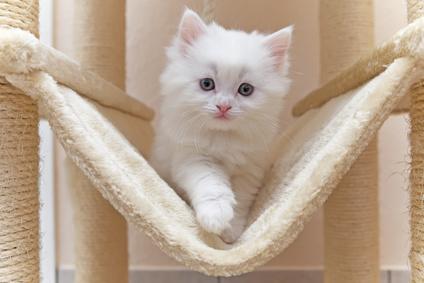 Katze im Katzenbaum