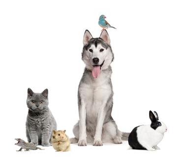 Vor und Nachteile Kleintiere
